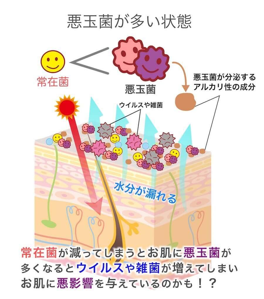 お肌の悪玉菌が増えている状態を説明している画像です。