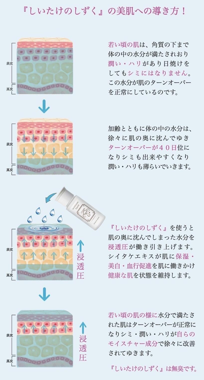 しいたけの美容液でお肌のターンオーバーが促進してゆく事を説明している画像です。